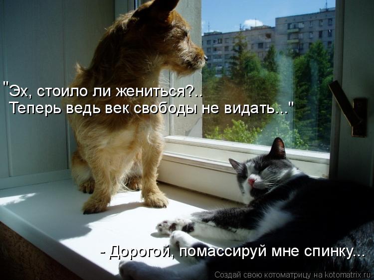 """Котоматрица: Эх, стоило ли жениться?..  Теперь ведь век свободы не видать..."""" """" - Дорогой, помассируй мне спинку..."""