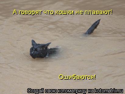 Котоматрица: А говорят что кошки не плавают!  Ошибаются!