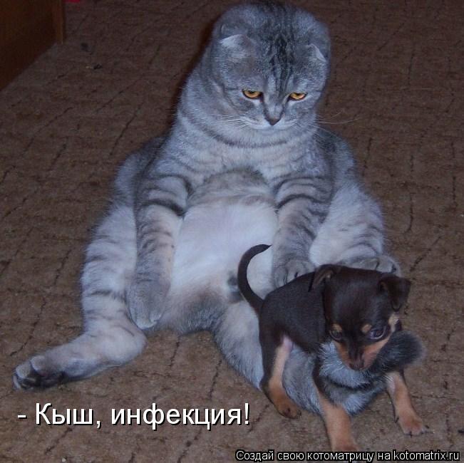 Котоматрица: - Кыш, инфекция!