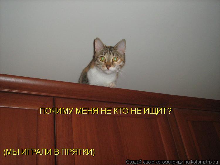 Котоматрица: (МЫ ИГРАЛИ В ПРЯТКИ) ПОЧИМУ МЕНЯ НЕ КТО НЕ ИЩИТ?