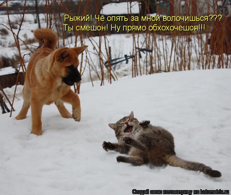 Котоматрица: Рыжий! Чё опять за мной волочишься??? Ты смешон! Ну прямо обхохочешся!!!