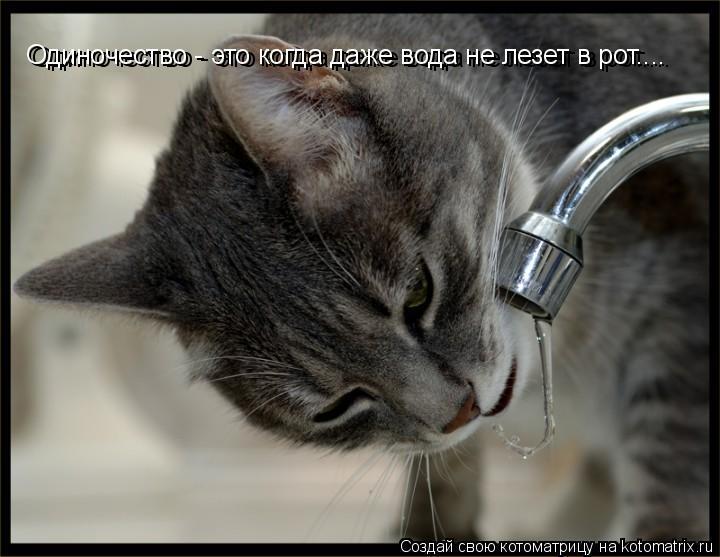 Котоматрица: Одиночество - это когда даже вода не лезет в рот.... Одиночество - это когда даже вода не лезет в рот....