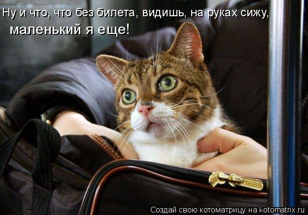 Котоматрица: Ну и что, что без билета, видишь, на руках сижу, маленький я еще!