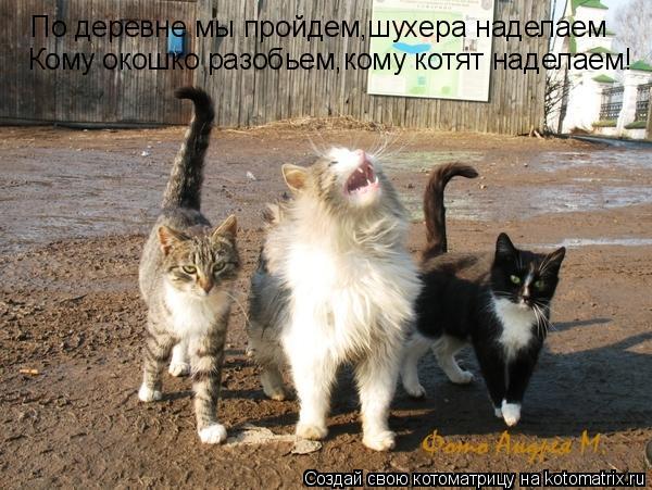 Котоматрица: По деревне мы пройдем,шухера наделаем Кому окошко разобьем,кому котят наделаем!