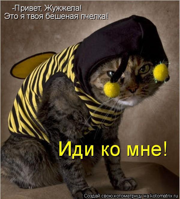 Котоматрица: -Привет, Жужжела! Это я твоя бешеная пчелка! Иди ко мне!
