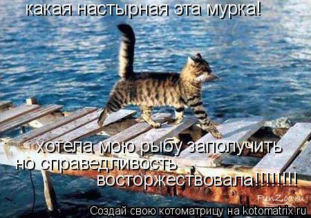 Котоматрица: какая настырная эта мурка! хотела мою рыбу заполучить но справедливость восторжествовала!!!!!!!!