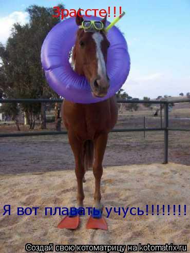 Котоматрица: Зрассте!!! Я вот плавать учусь!!!!!!!!