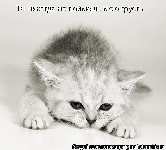 Котоматрица: Ты никогда не поймешь мою грусть...