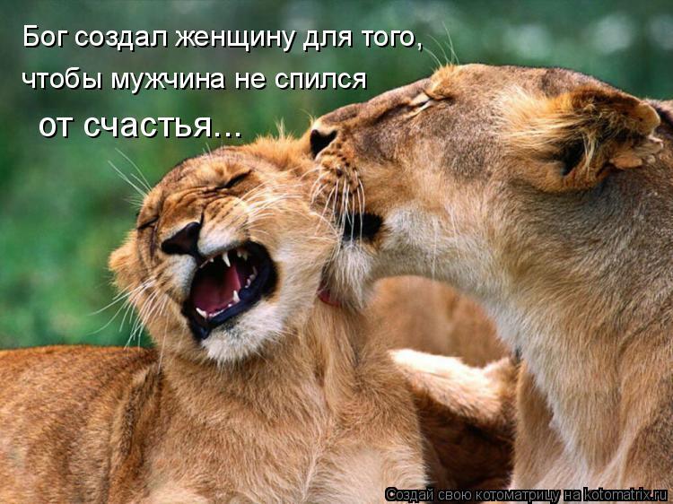 Котоматрица: Бог создал женщину для того, чтобы мужчина не спился от счастья...