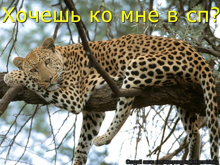 Котоматрица: Хочешь ко мне в сп?