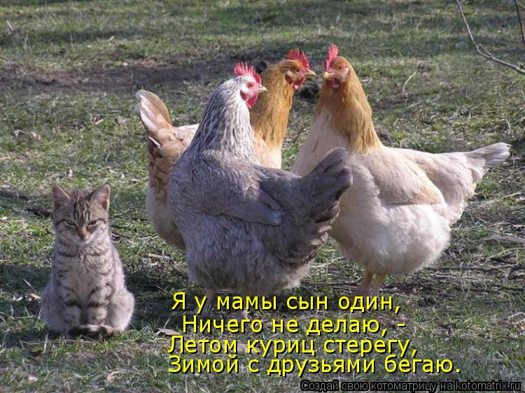 Котоматрица: Я у мамы сын один,  Ничего не делаю, -  Летом куриц стерегу,  Зимой с друзьями бегаю.