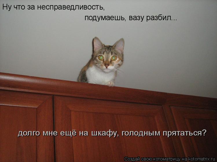 Котоматрица: Ну что за несправедливость, подумаешь, вазу разбил... долго мне ещё на шкафу, голодным прятаться?
