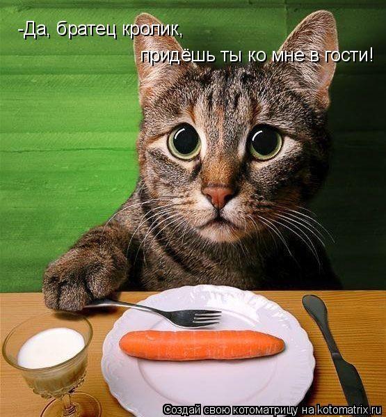 Котоматрица: -Да, братец кролик, придёшь ты ко мне в гости!