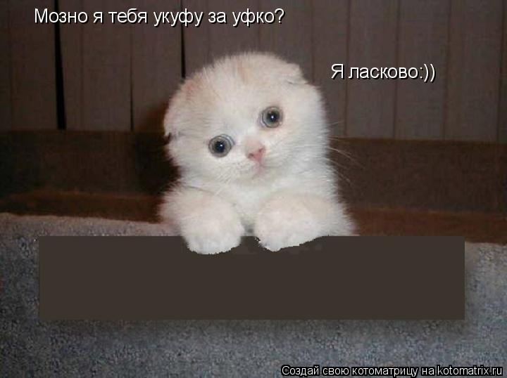 Котоматрица: Мозно я тебя укуфу за уфко? Я ласково:))