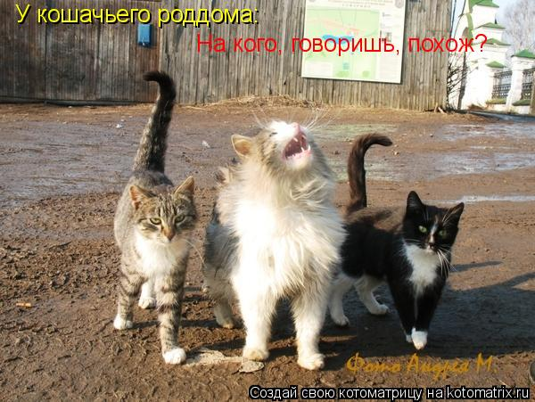Котоматрица: У кошачьего роддома: На кого, говоришь, похож?
