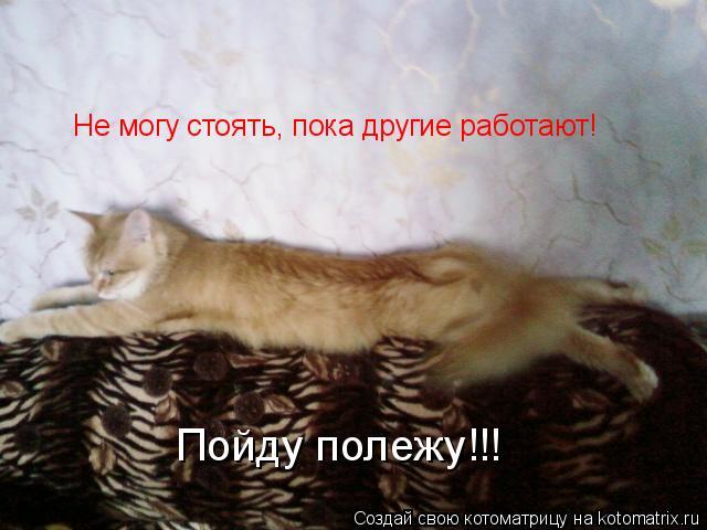 Котоматрица: Не могу стоять, пока другие работают! Пойду полежу!!!