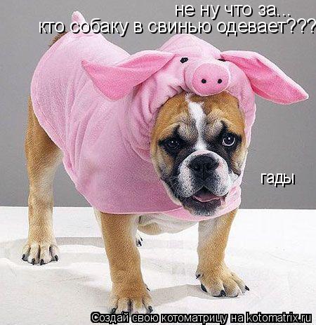 Котоматрица: не ну что за... кто собаку в свинью одевает??? гады