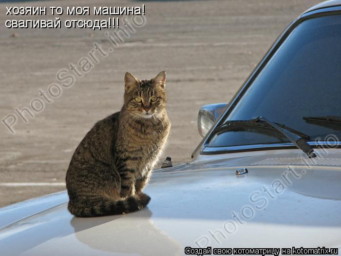 Котоматрица: хозяин то моя машина! сваливай отсюда!!!