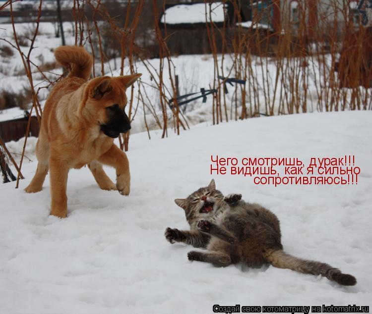 Котоматрица: Чего смотришь, дурак!!! Чего смотришь, дурак!!! Не видишь, как я сильно сопротивляюсь!!!