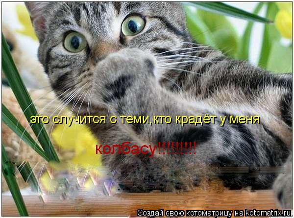 Котоматрица: это случится с теми,кто крадёт у меня колбасу!!!!!!!!!
