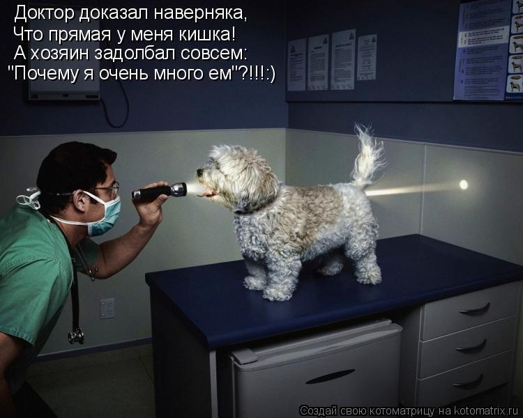 """Котоматрица: Доктор доказал наверняка, Что прямая у меня кишка! А хозяин задолбал совсем: """"Почему я очень много ем""""?!!!:)"""