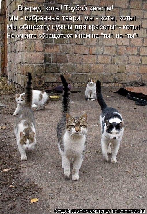 """Котоматрица: Вперед, коты! Трубой хвосты! Мы - избранные твари, мы - коты, коты! Мы обществу нужны для красоты: - коты! Не смейте обращаться к нам на """"ты"""", на """"т"""