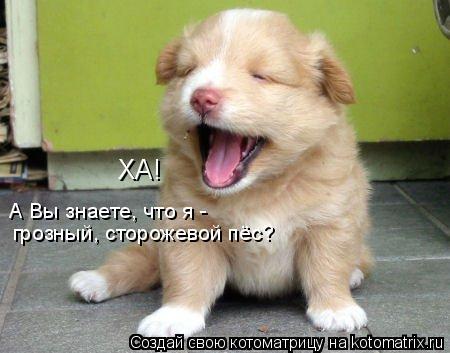 Котоматрица: ХА! А Вы знаете, что я -  грозный, сторожевой пёс?