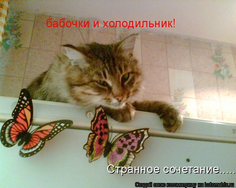 Котоматрица: бабочки и холодильник! Странное сочетание........