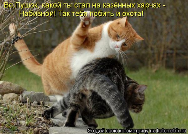 Котоматрица: Во,Пушок, какой ты стал на казённых харчах - Набивной! Так тебя побить и охота!