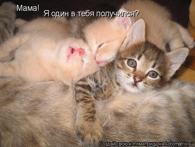 Котоматрица: Мама! Я один в тебя получился?