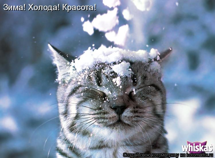 Котоматрица: Зима! Холода! Красота!