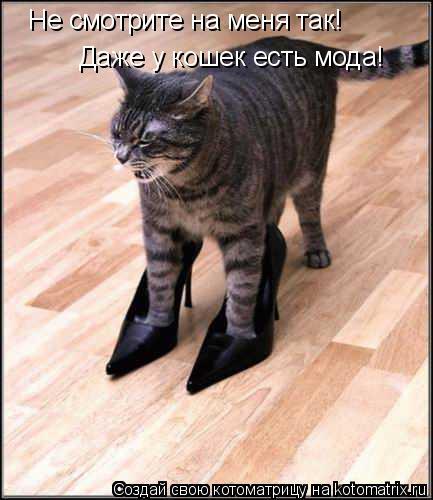 Котоматрица: Не смотрите на меня так! Даже у кошек есть мода!