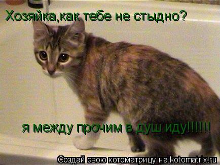 Котоматрица: Хозяйка,как тебе не стыдно? я между прочим в душ иду!!!!!!