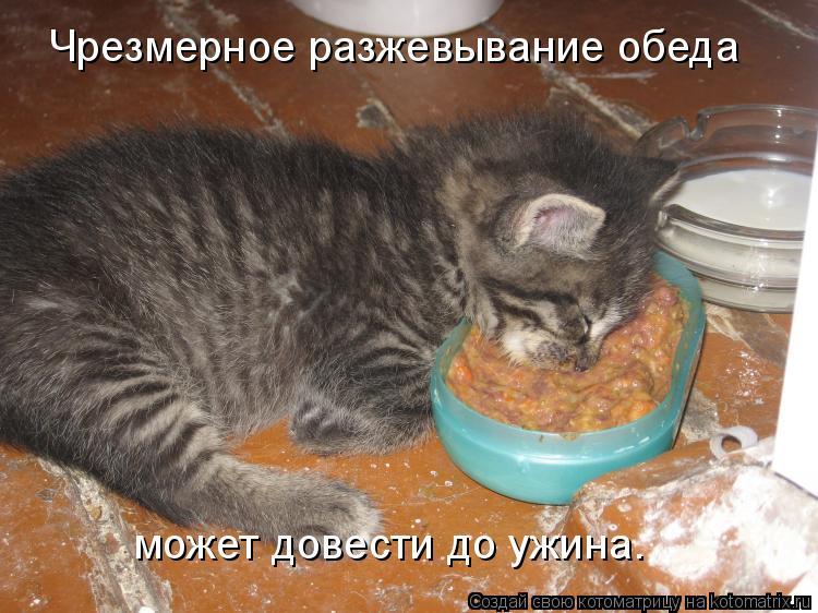 Котоматрица: Чрезмерное разжевывание обеда может довести до ужина.