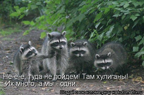 Котоматрица: Не-е-е, туда не пойдем! Там хулиганы! Их много, а мы - одни...