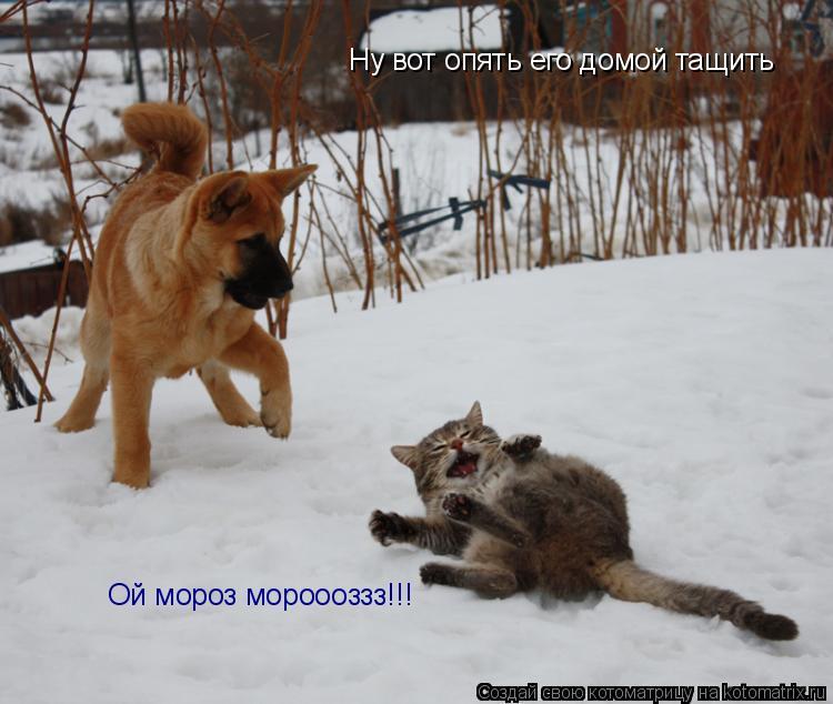 Котоматрица: Ну вот опять его домой тащить Ой мороз мороооззз!!!
