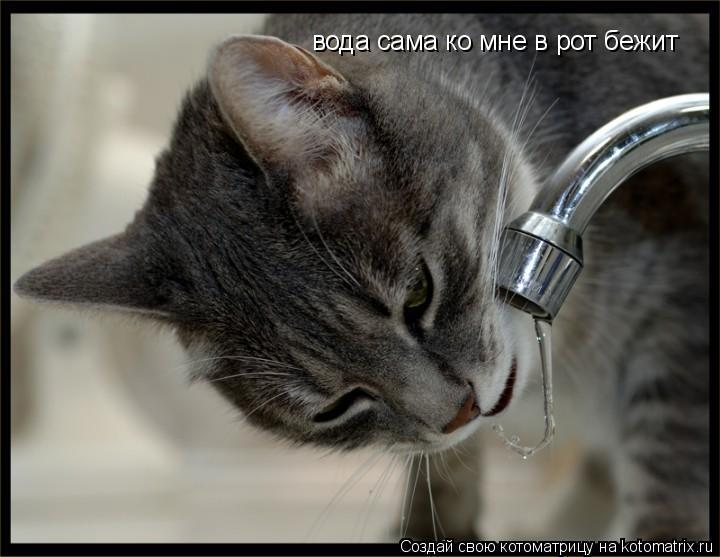 Котоматрица: вода сама ко мне в рот бежит