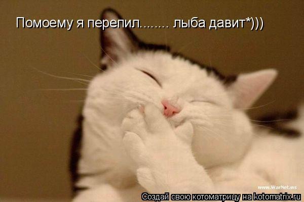 Котоматрица: Помоему я перепил........ лыба давит*)))