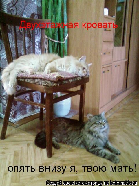 Котоматрица: Двухэтажная кровать опять внизу я, твою мать!