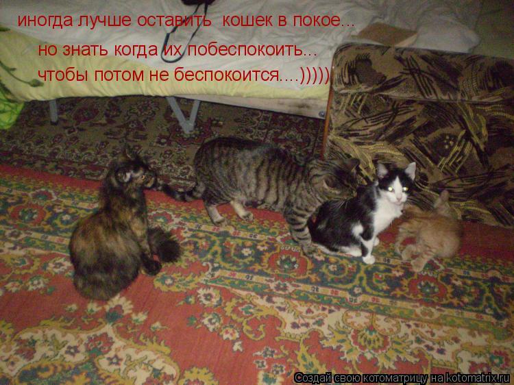 Котоматрица: иногда лучше оставить  кошек в покое... но знать когда их побеспокоить... чтобы потом не беспокоится....)))))