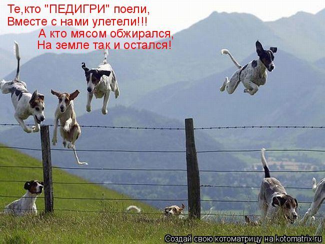 """Котоматрица: Те,кто """"ПЕДИГРИ"""" поели, Вместе с нами улетели!!! А кто мясом обжирался, На земле так и остался!"""