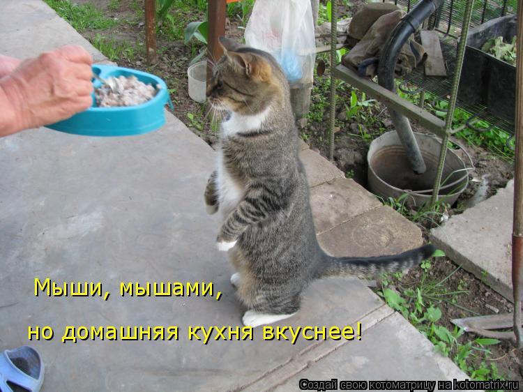 Котоматрица: Мыши, мышами,  но домашняя кухня вкуснее!