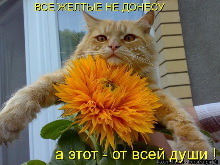 Котоматрица: ВСЕ ЖЕЛТЫЕ НЕ ДОНЕСУ а этот - от всей души !