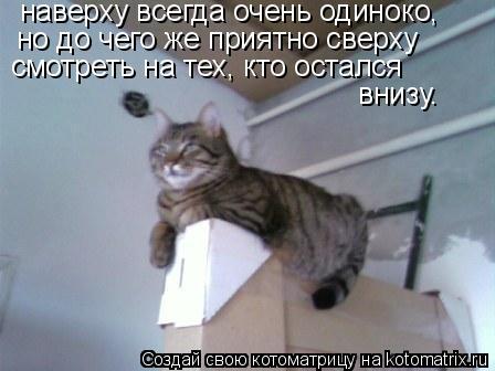 Котоматрица: наверху всегда очень одиноко, но до чего же приятно сверху смотреть на тех, кто остался  внизу.