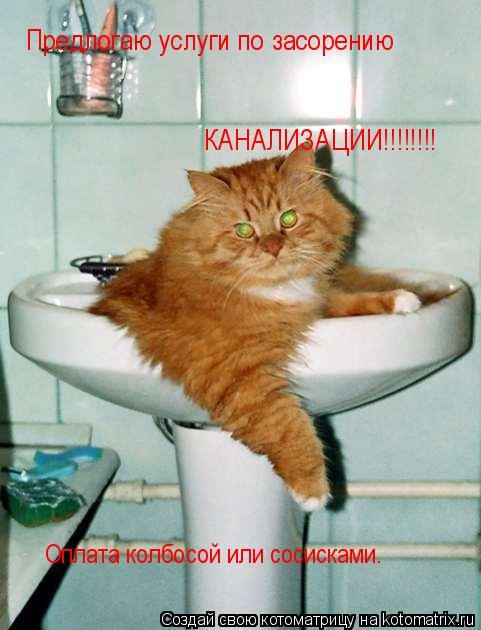Котоматрица: Предлогаю услуги по засорению КАНАЛИЗАЦИИ!!!!!!!! Оплата колбосой или сосисками.