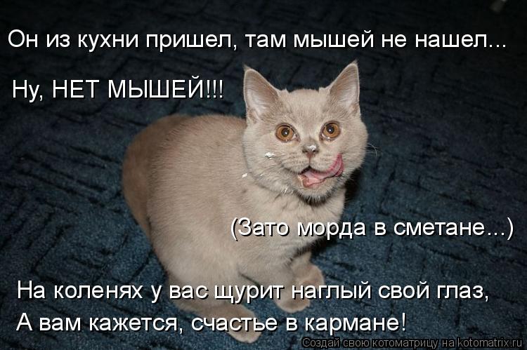 Котоматрица: Ну, НЕТ МЫШЕЙ!!! Он из кухни пришел, там мышей не нашел... (Зато морда в сметане...) На коленях у вас щурит наглый свой глаз, А вам кажется, счастье