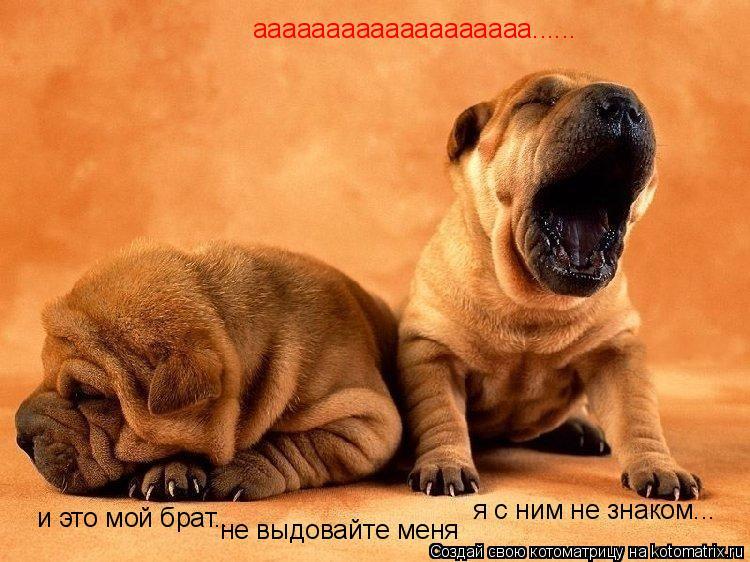 Котоматрица: ааааааааааааааааааа...... и это мой брат... не выдовайте меня я с ним не знаком...