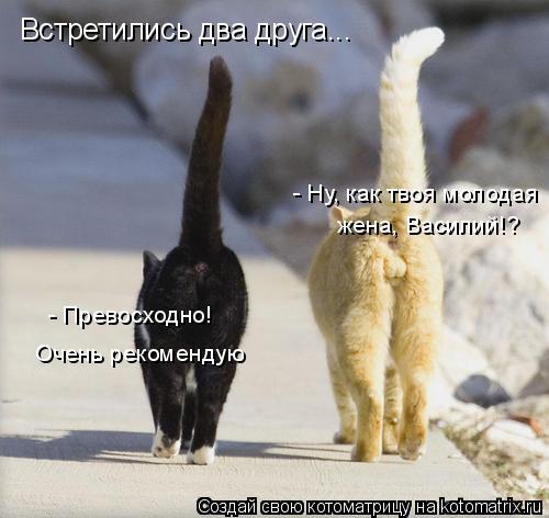 Котоматрица: Встретились два друга... - Ну, как твоя молодая жена, Василий!? - Превосходно! Очень рекомендую