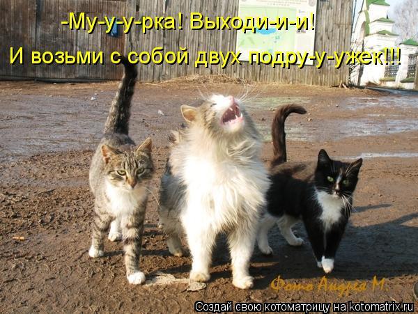 Котоматрица: И возьми с собой двух подру-у-ужек!!! -Му-у-у-рка! Выходи-и-и!