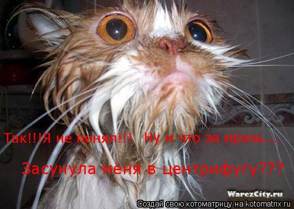 Котоматрица: Так!!!Я не понял!!! Ну и что за мразь... Засунула меня в центрифугу???